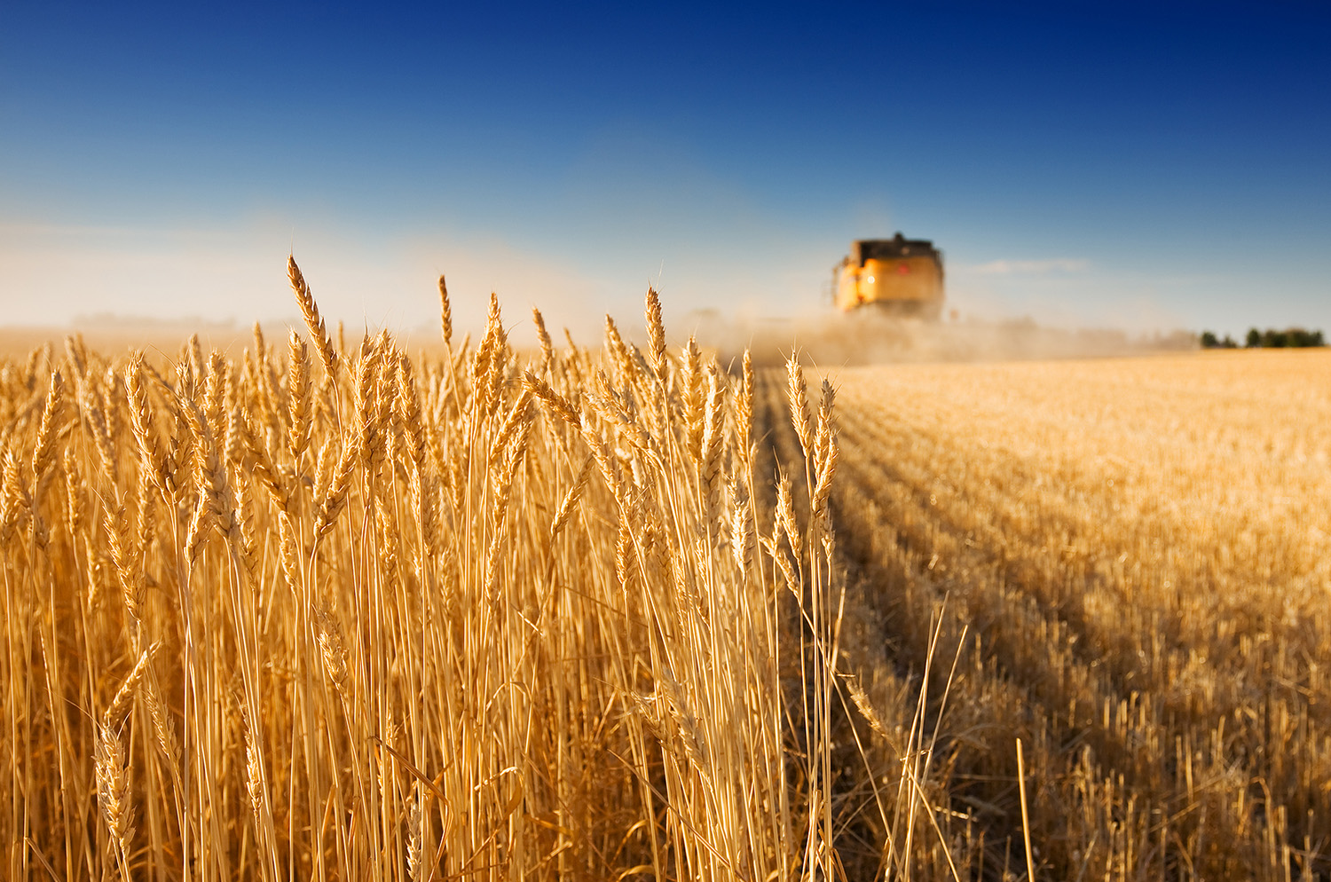 bigstock-Harvest-Time-1946380.jpg